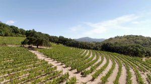 wine vineyards in Napa